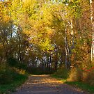 Minnesota Bike Path by Mitchell Tillison