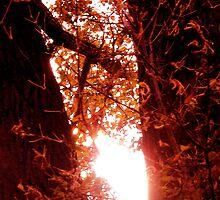 Radiant Rays of Hope by Sheila Van Houten