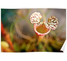 Hooded Pitcher Plant Poster