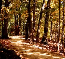 The Path by Sandy Woolard