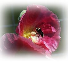 Bee And The Holly Hock by Jonice