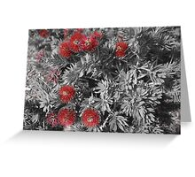 A touch of Bottle Brush Plant Greeting Card