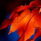It's the Season! by Sandy Woolard