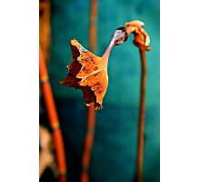 Turquoise and Rust Photographic Print