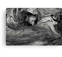 Stump Canvas Print
