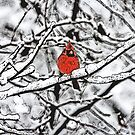 Winter Cardinal Sumi-e by Otto Danby II