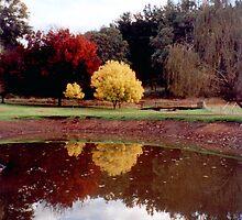 Claret & Golden Ash  - H Hulme by Golden Valley Tree Park