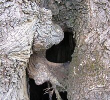 Hollow Elm - Andrew Thamo by Golden Valley Tree Park