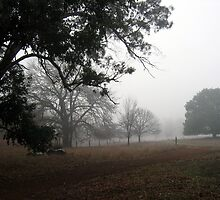 Misty Winter's Morning - Andrew Thamo by Golden Valley Tree Park