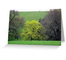 "Quercus robur  ""Concordia"" - A Thamo Greeting Card"