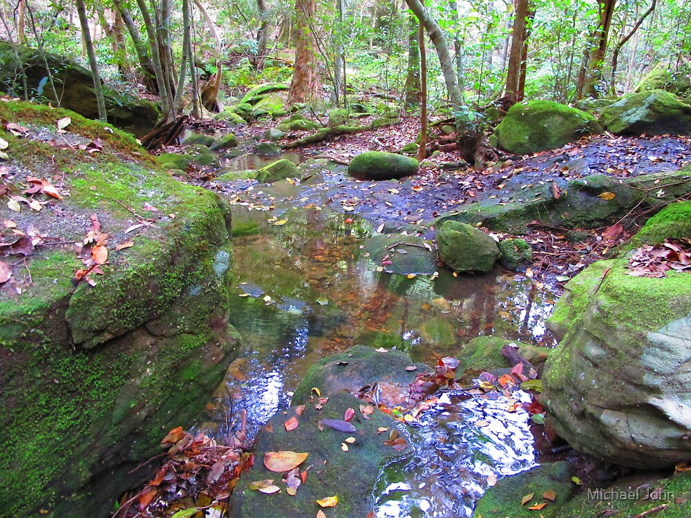 Rainforest Creek by Michael John