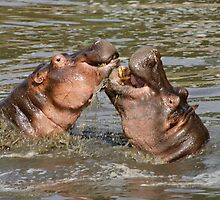 """""""hippos in love"""" by roger smith"""