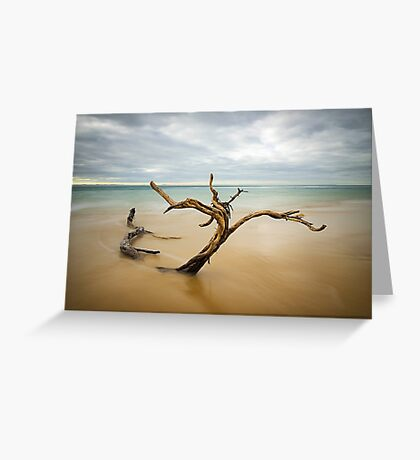 Tree, Point Nepean Greeting Card