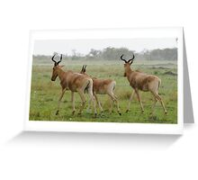 """""""heading for cover"""" Greeting Card"""