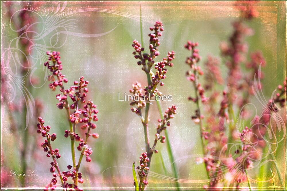 Sorrel by Linda Lees