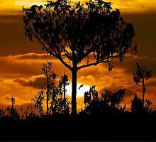 Australian Sunrise by John Dalkin