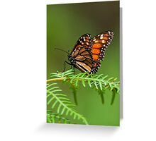 """""""Just Landed"""" Greeting Card"""