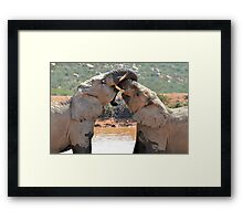 Wrestle Mania Framed Print