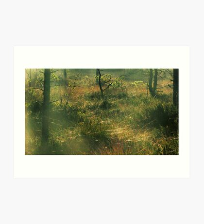 17.10.2011: Morning at the Swamp Forest Art Print
