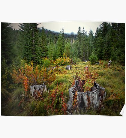 High Cascades Fall Poster