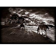 Horses 3 Photographic Print
