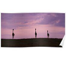 """masai dawn"" (panorama) Poster"
