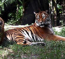 Mom With One Of Her Three Cubs by Gail Falcon