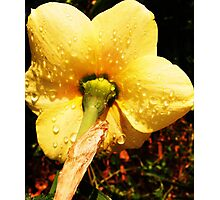 Underneath the Daffodil Photographic Print