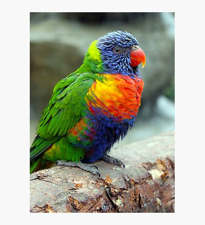 Colourful Bird Photographic Print