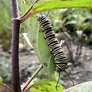 Home Sweet Home - Caterpillar by Barberelli