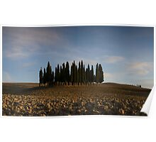 pencil pines near pienza Poster