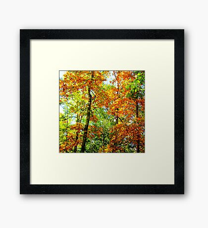 Front Yard Autumn Framed Print