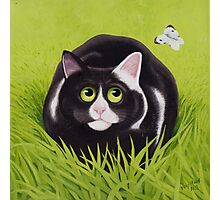 Cat and Cabbage White Photographic Print