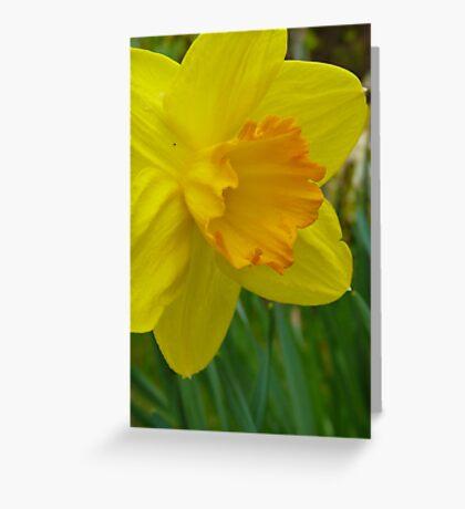 Daffodil Greeting Card