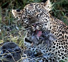 Leopard having dinner by Marylou Badeaux