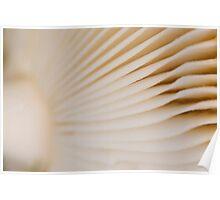 Mushroom Gills Poster