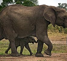 Elephants - Baby with Mother by Henry Jager