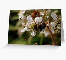 Blackberry Bumble Greeting Card