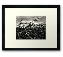 Harvest Winds Framed Print