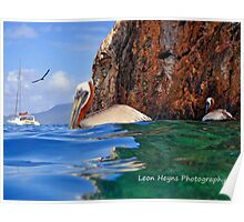 Pelican at the caves Greeting Card Poster