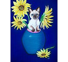 Sunflowers Scratch.. Photographic Print