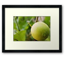 Love Lemon Framed Print