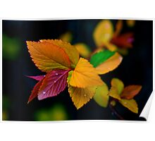Rainbow Leaf with Rain Drops Poster