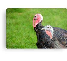 Turkeys... Metal Print