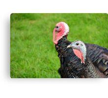 Turkeys... Canvas Print