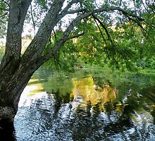 Branch of Wisonsin River by Martha Sherman