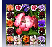 Sunshine and Showers Summer Flowers Collage Photographic Print