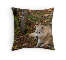 Arctic Wolf - Autumn Nap Throw Pillow