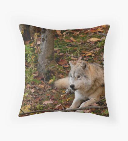 Arctic Wolf - Autumn Nap Throw Pillow