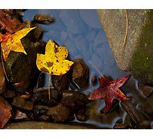 Fallen Colors Photographic Print
